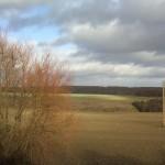 forêt plaine